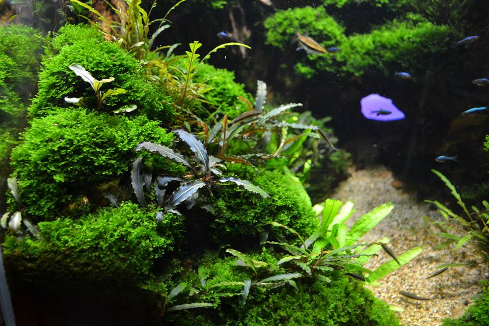 aquascaping12