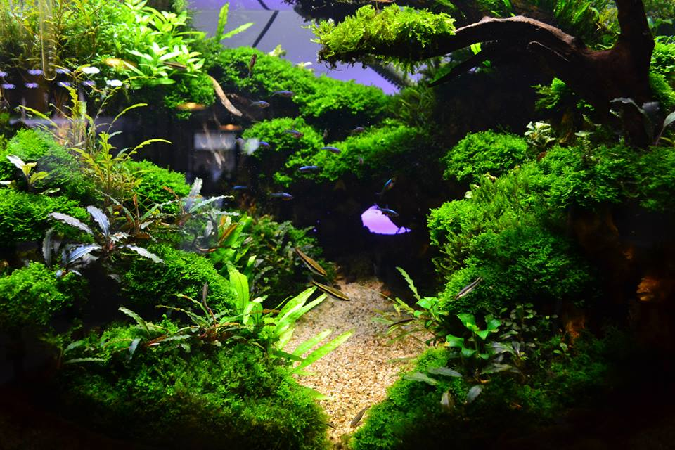 aquascaping7