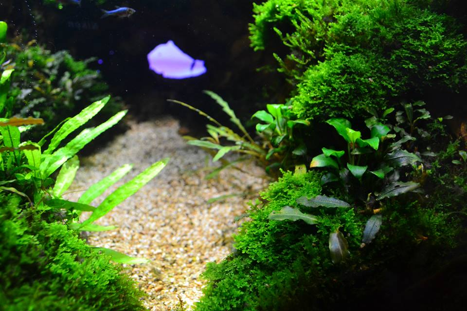 aquascaping8