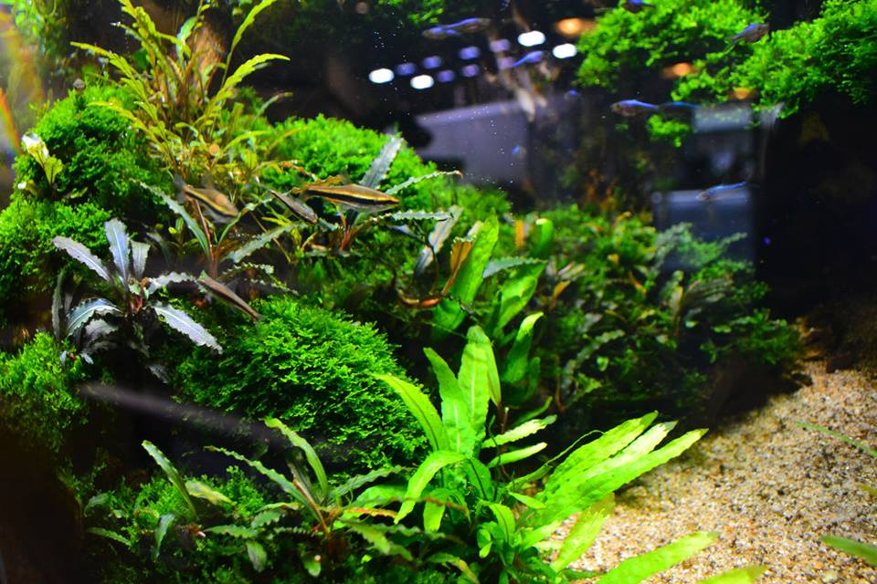 aquascaping9