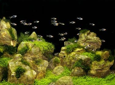 Фон пленочный двусторонний Tetra Deco Art Скалы/Растения (60х45см.) - 1