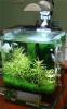 Аквариум Dennerle NanoCube Complete 10 литров Полный комплект - 1