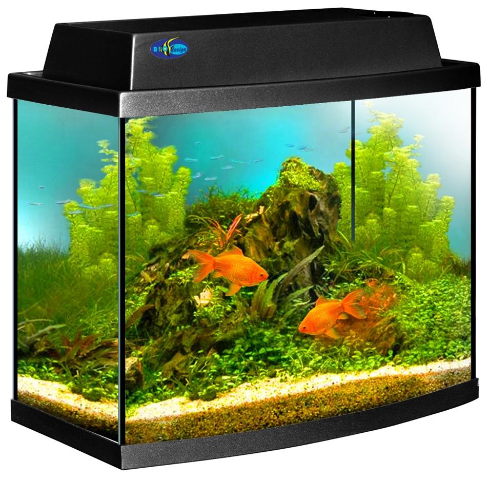 аквариум аквариумные рыбки картинки