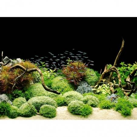 Фон пленочный двусторонний Tetra Deco Art Скалы/Растения (60х45см.)