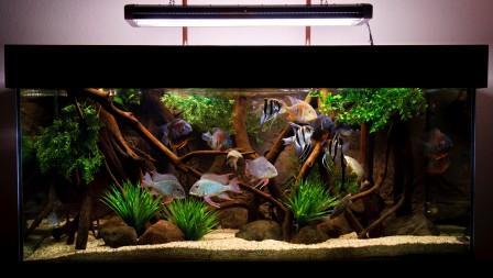 недорогие аквариумы